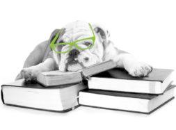 bulldog-rentree-big